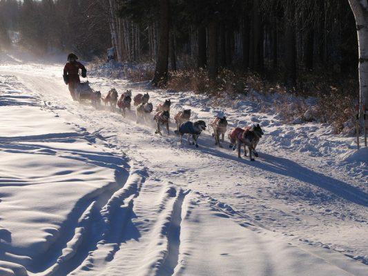 Hundeschlittenrennen Yukon Quest